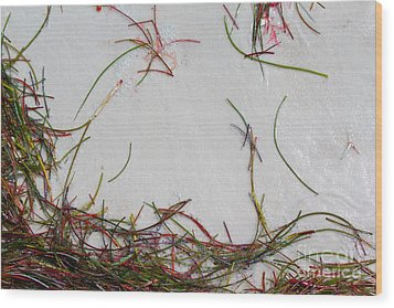 Wood Print featuring the photograph Colorful Beach Grass by Jeanne Forsythe