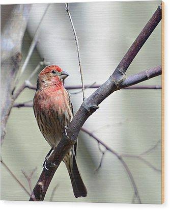 Colorful Bird In Winter Wood Print by Susan Leggett