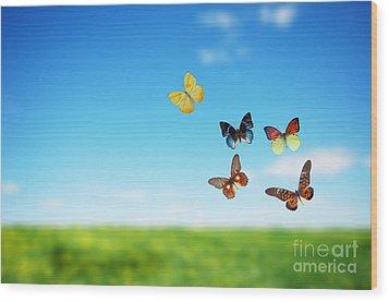 Colorful Buttefly Spring Field Wood Print by Michal Bednarek