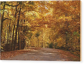 Colorful Canopy Wood Print by Sandy Keeton