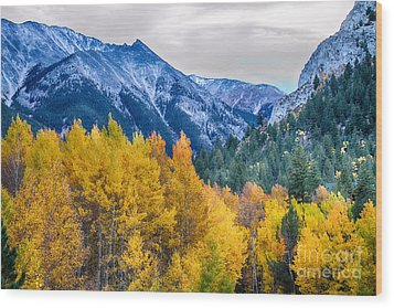 Colorful Crested Butte Colorado Wood Print by James BO  Insogna
