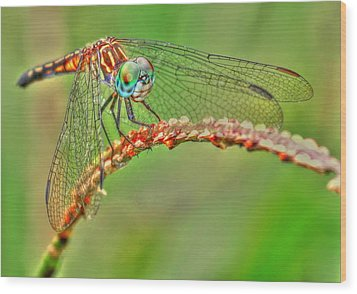 Colorful Dragonfly Wood Print