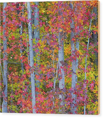 Colorful Fall Leaves Wood Print by Scott Cameron