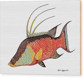 Colorful Hogfish Wood Print by Steve Ozment