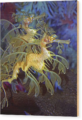 Colorful Leafy Sea Dragons Wood Print