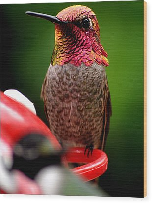 Wood Print featuring the photograph Colorful Male Anna Hummingbird On Perch by Jay Milo