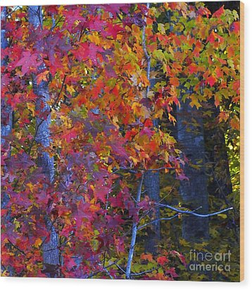 Colorful Maple Leaves Wood Print by Scott Cameron
