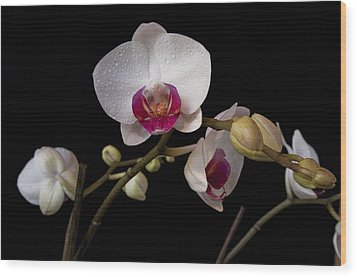 Colorful Moth Orchid Wood Print