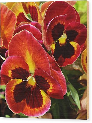 Colorful Pansies Wood Print by Bruce Bley