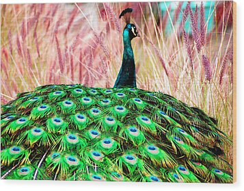 Wood Print featuring the photograph Colorful Peacock by Matt Harang