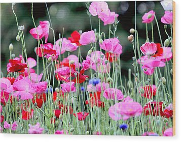 Wood Print featuring the photograph Colorful Poppies by Peggy Collins