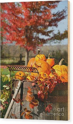 Colorful Pumpkins And Gourds Wood Print by Sandra Cunningham