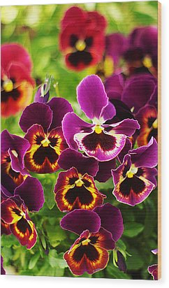Wood Print featuring the photograph Colorful Purple Pansies by Suzanne Powers