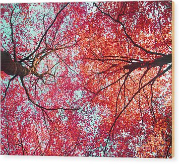 Abstract Red Blue Nature Photography Wood Print by Artecco Fine Art Photography