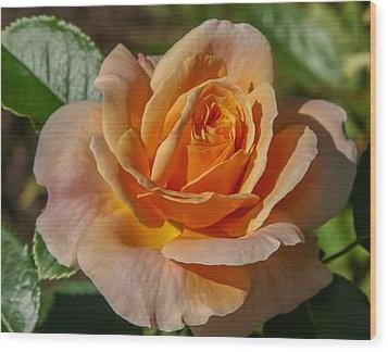 Colorful Rose Wood Print