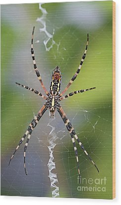 Colorful Spider Wood Print by Kevin McCarthy