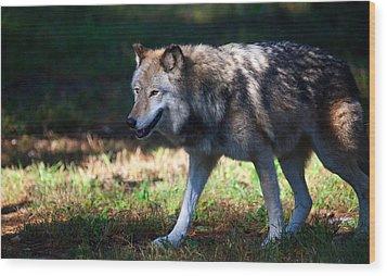 Colorful Wolf Wood Print by Karol Livote