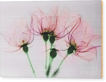 Colorized X-ray Of Roses Wood Print by Scott Camazine