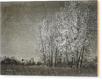 Colorless Fall Wood Print by Jeff Swanson