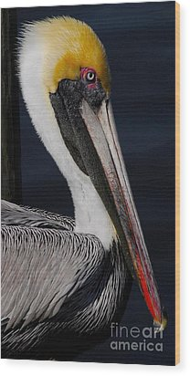 Colors Of A Pelican Wood Print