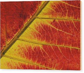 Colors Of Autumn Wood Print by Meir Ezrachi
