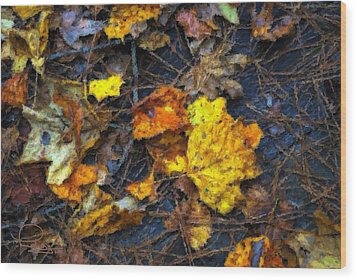 Wood Print featuring the photograph Colors Of Fall by Ludwig Keck