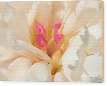 Colors Of Nature - Pink Centerpiece Wood Print by George Bostian
