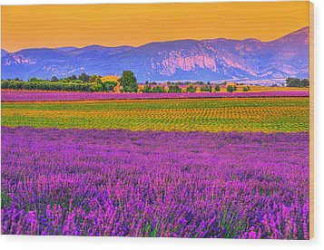 Colors Of Provence Wood Print by Midori Chan