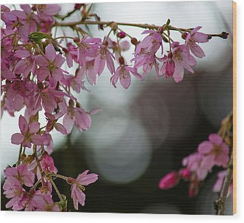 Wood Print featuring the photograph Colors Of Spring - Cherry Blossoms by Jordan Blackstone