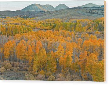 Colors Of The Season Wood Print