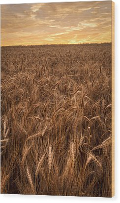 Colors Of Wheat Wood Print by Scott Bean