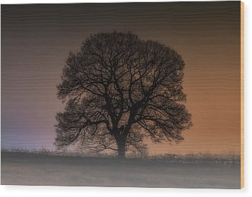 Wood Print featuring the photograph Colour Tree by Stewart Scott