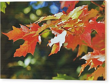 Wood Print featuring the photograph Colours Of Fall by Al Fritz
