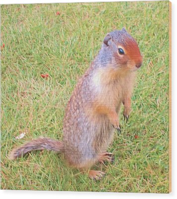 Columbian Ground Squirrel Wood Print by Cathy Long