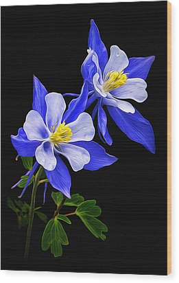 Wood Print featuring the photograph Columbine Duet by Priscilla Burgers