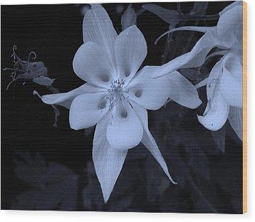Columbine Flower Wood Print
