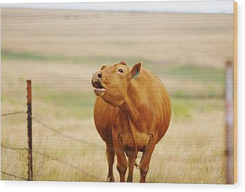 Wood Print featuring the photograph Come And Get It by Shirley Heier