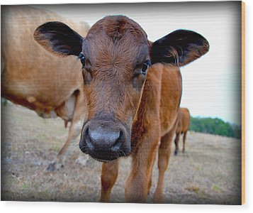 Wood Print featuring the photograph Come Close For A Cow Kiss by Amanda Vouglas