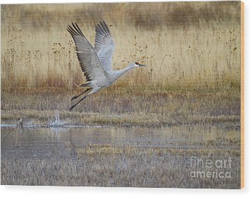 Come Fly With Me Wood Print by Ruth Jolly