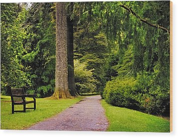 Come Sit With Me. Benmore Botanical Garden. Scotland Wood Print by Jenny Rainbow