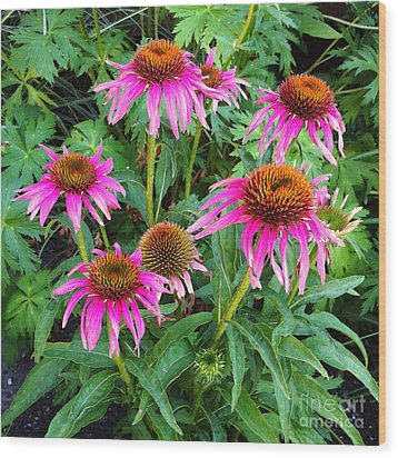 Comely Coneflowers Wood Print by Meghan at FireBonnet Art