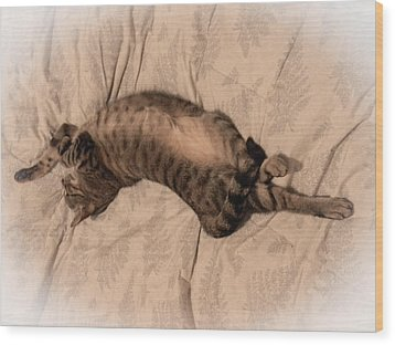 Comfy Cat Wood Print by Christy Usilton