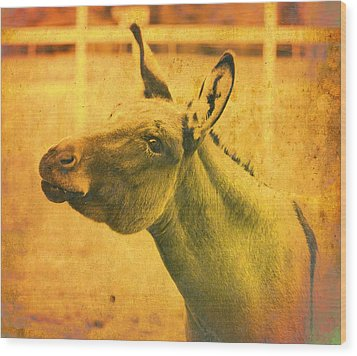 Comical Donkey Wood Print