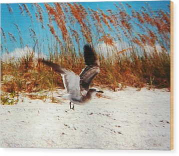 Windy Seagull Landing Wood Print