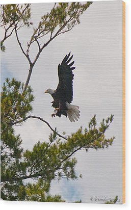 Wood Print featuring the photograph Coming In For A Landing by Brenda Jacobs