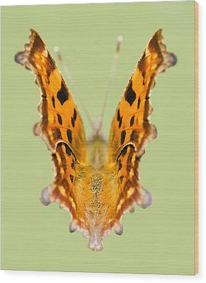 Comma Butterfly Wood Print