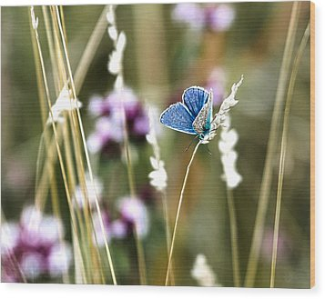 Common Blue  Wood Print