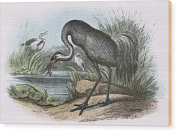 Common Crane Wood Print by English School