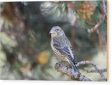Common Crossbill Juvenile Wood Print by Dr P. Marazzi