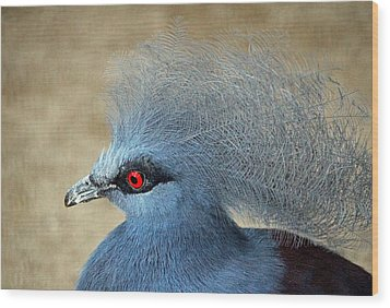 Common Crowned Pigeon Wood Print by Cynthia Guinn
